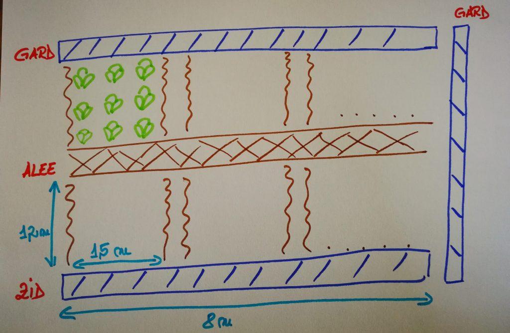 A treia etapă în organizarea grădinii: împărțirea spațiului