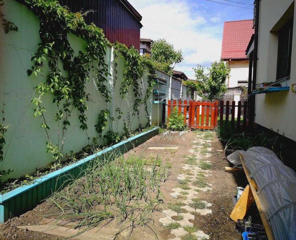 Suprafața grădinii așezate între două ziduri, este mică