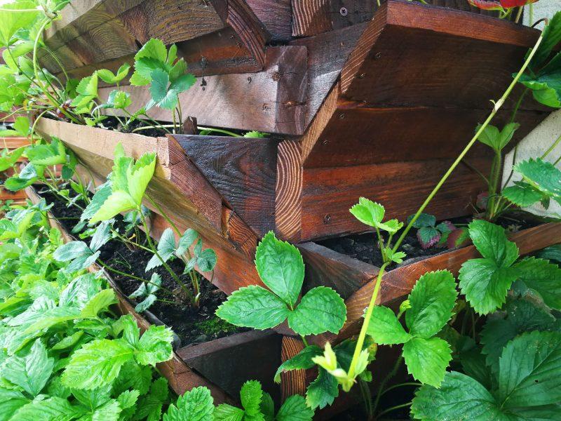 Vedere de aproape din unghi cu mini-terasele construite pentru cultivarea pe verticală