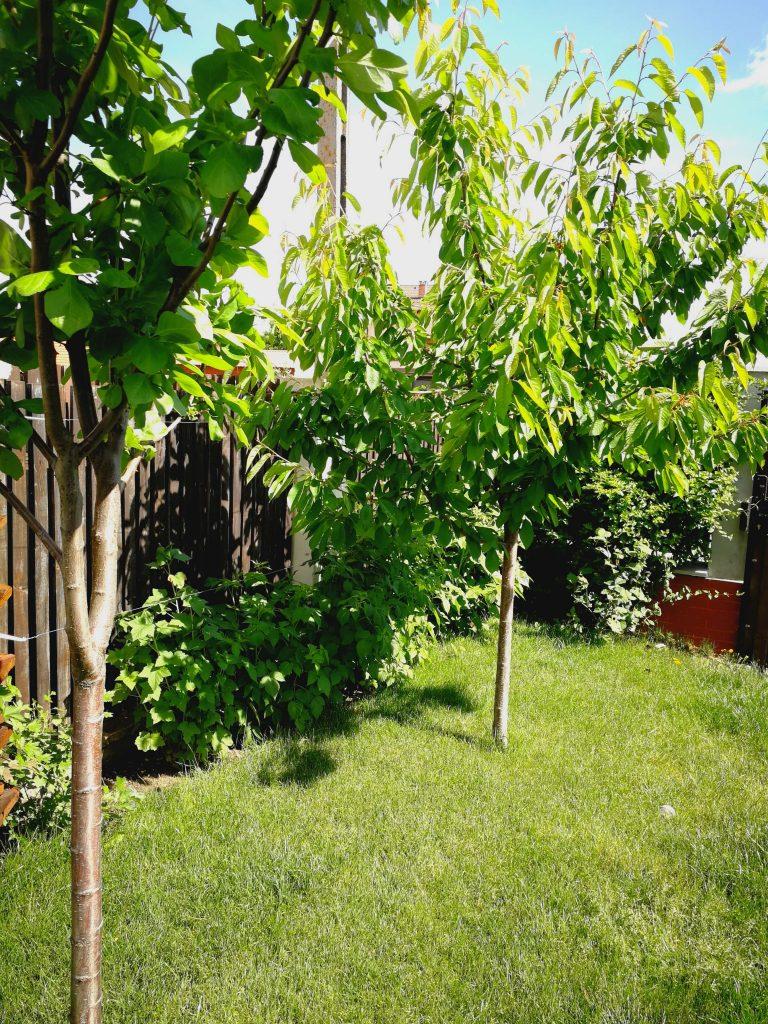 Pomii fructiferi, tufele de zmeură, coacăze și agrișe plantate pe lângă gard sunt un prim artificiu pentru a compensa dimensiunea grădinii