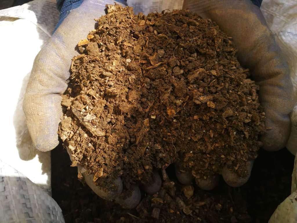 O mână de compost ce va fi împrăștiată prin grădina de legume
