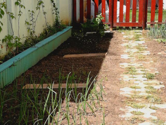 Gradina de legume pozitionata in semi-umbra. Pe straturi se poate vedea ceapa si alte plante rasarite in fundal.