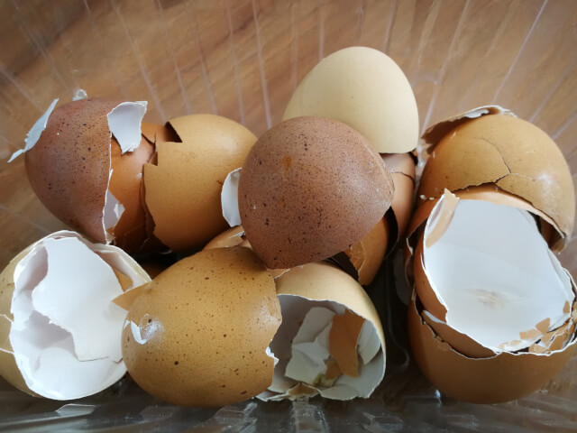 Coaja de ou ca ingrasamant organic pentru gradina