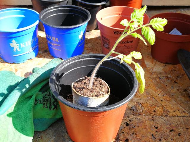 Transplantarea de rasaduri de legume si flori