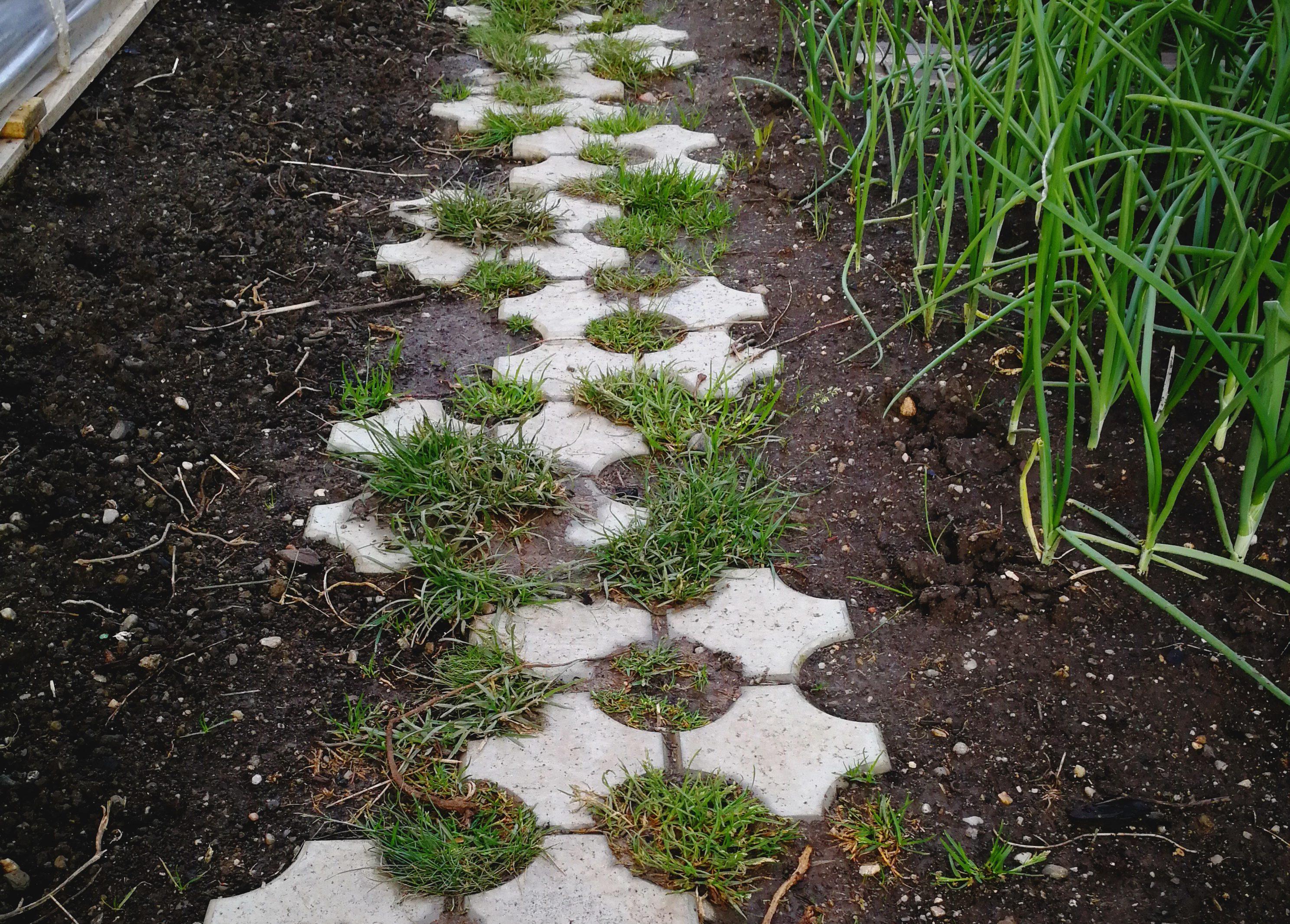 Prima etapă legată de organizarea grădinii a fost construcția căii de acces