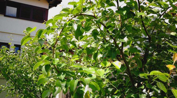 Stabilirea locului grădinii și mărimii suprafeței