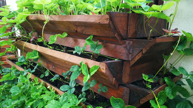Cultivarea pe verticală și maximizarea suprafeței
