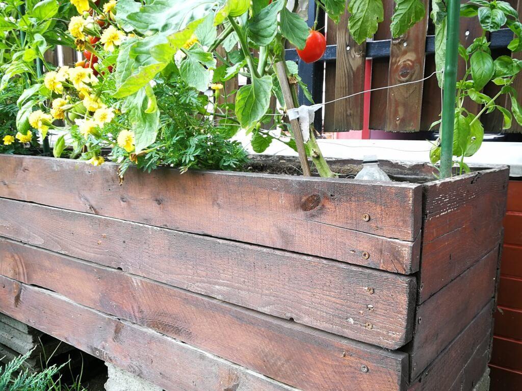 Gradini verticale pentru rosii asezate peste zone betonate