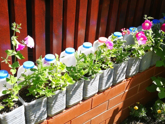 Flori plantate în bidoane din plastic decupate