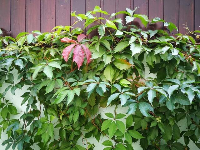 Septembrie, despre toamnă în grădină