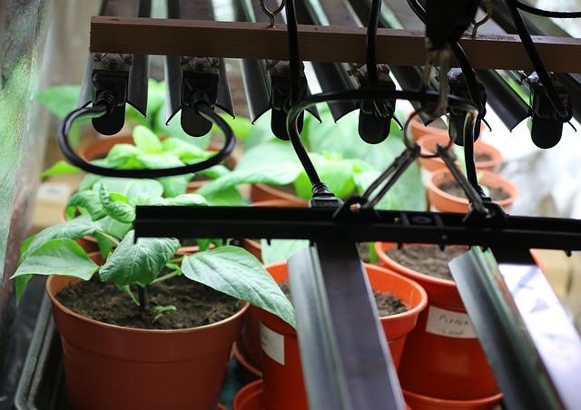 Ghivece sub o instalatie pentru lumina de crestere plante