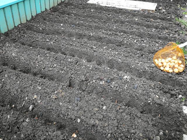 Lucrari de primavara in gradina: strat pregatit pentru plantarea bulbilor de ceapa