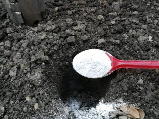 Pudra din coaja de ou se aplica cu lingura in groapa pregatita pentru rasad